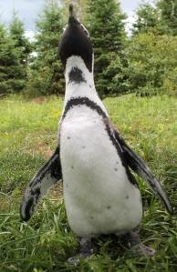 Happy Penguin Photo