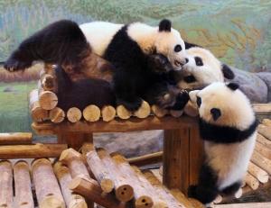 Pandas 02 calendar