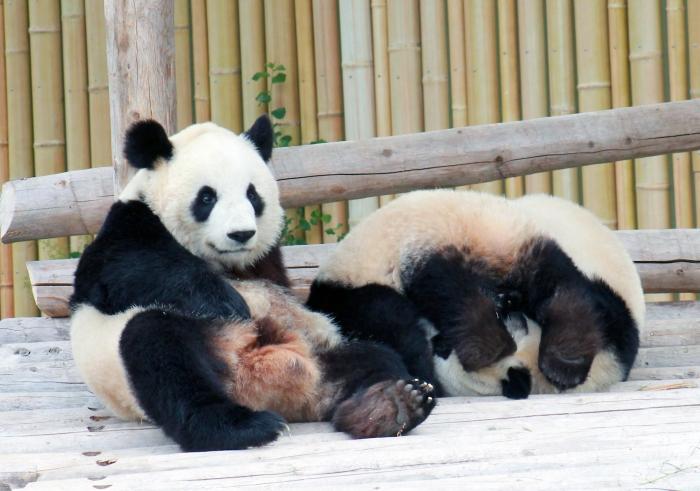 Pandas 4