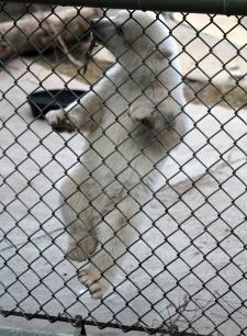 Juno fenceclimber