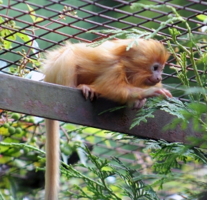 Tamarin for blog post