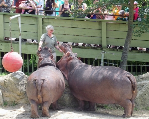 Alison and hippos 03