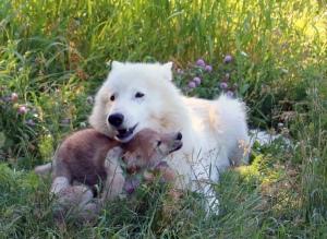 Vera amd cubs