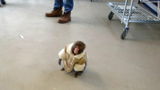 121210054357-ikea-monkey-story-top