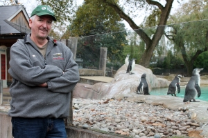 Humboldt penguin 5