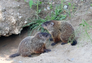 Groundhogs 05