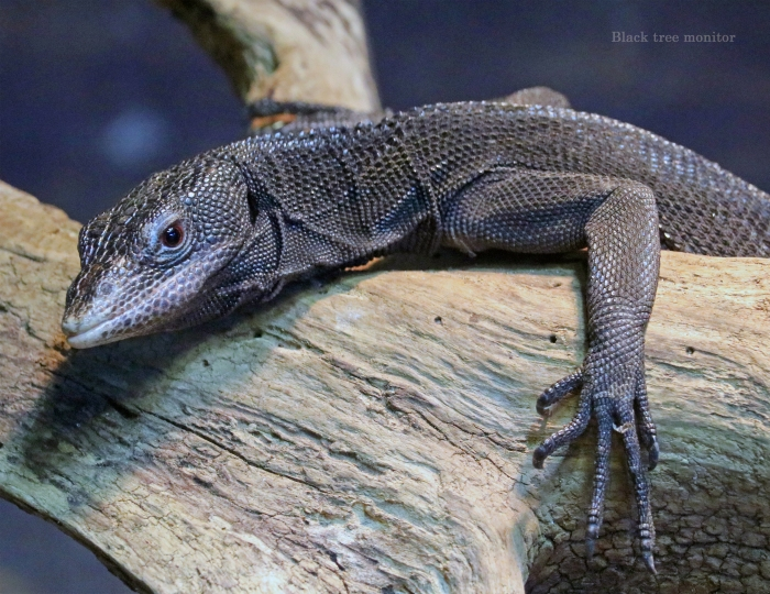 10 Black tree monitor October