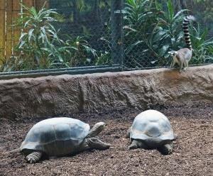 Aldabras 02 (2)