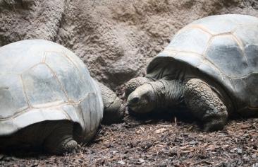 Aldabras 04 (2)